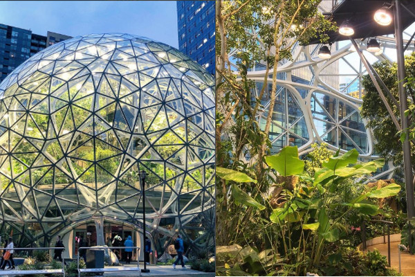 アメリカに植物だらけのAmazon新オフィスが誕生