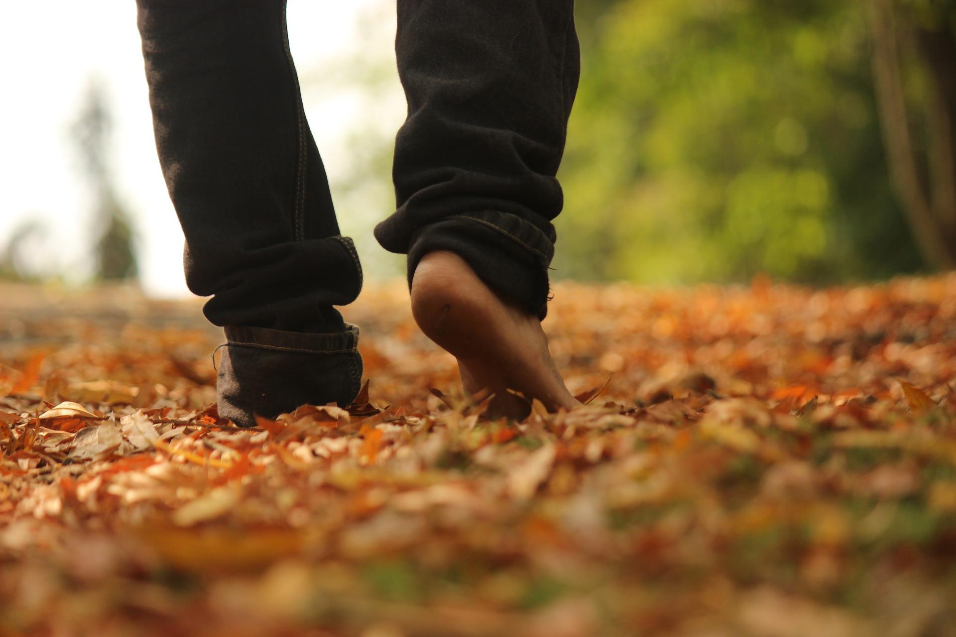散歩 落ち葉 有酸素運動